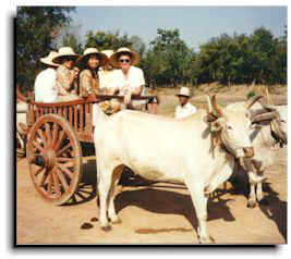 The tourists in an ox cart